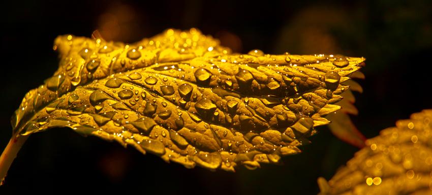 Gold leaf service, Recruit Mint, recruitment agency, Peterborough, Cambridgeshire