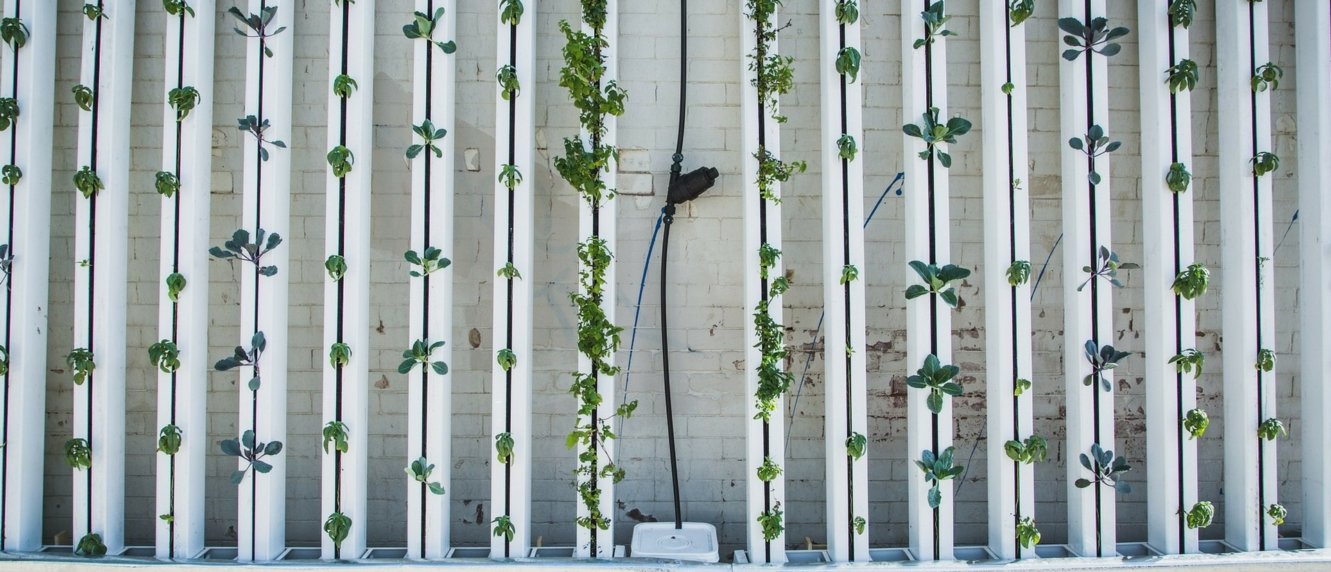 Vertical Farming - Sustainability